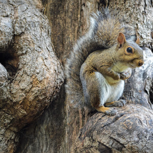 squirre;.jpg