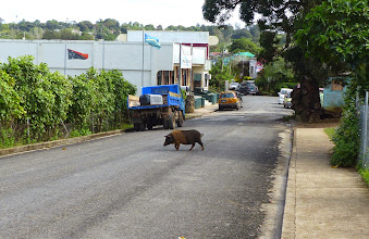 Photo: Why did the pig..... oh, never mind.  Very little traffic for it, though -this is Main Street!