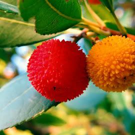 by Boris Buric - Food & Drink Fruits & Vegetables (  )