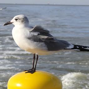 Watching by Deegee English - Animals Birds ( looking, water, bird, wind, pose, post, yellow, eye,  )