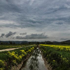 Ljubljansko barje by Lucija Janša - Landscapes Waterscapes