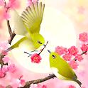 Plum-Blossom and White-Eye Tri icon