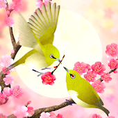 Plum-Blossom and White-Eye Tri