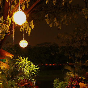 Warm night by Andreas Tan - Nature Up Close Gardens & Produce