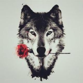 6500 wolf wallpapers apk download apkpure co