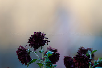 Photo: Sony Alpha 580 w/ 85mm f/1.4 Carl Zeiss lens @ f/1.7, 1/200sec, ISO 100