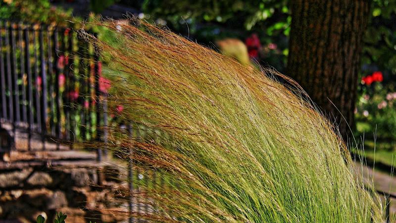 Ciuffo d'erba al vento di marvig51