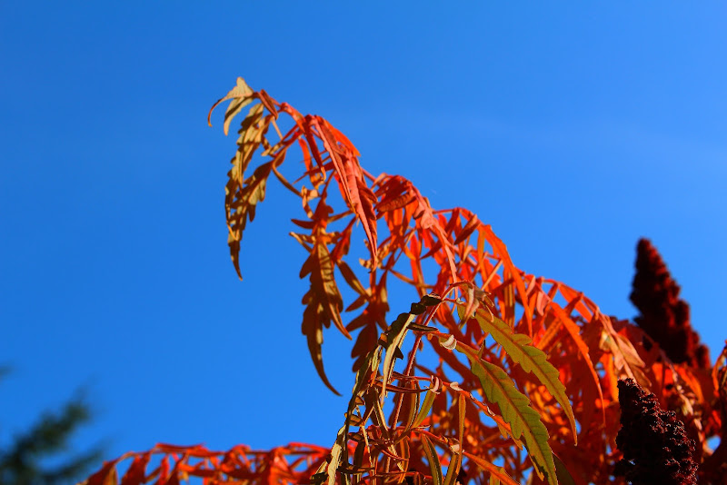 Orange Blue di Carlotaia