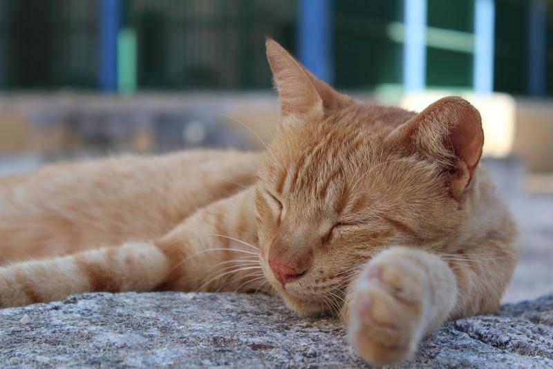 Gatto rosso di chiara_barletta