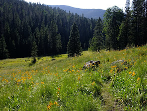 Photo: Meadow in the late afternoon