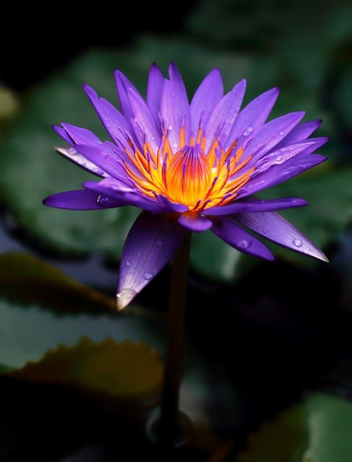 by Aryanto Sujono - Nature Up Close Flowers - 2011-2013