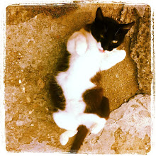 Photo: Just cat laziness... #cat #pet #intercer #romania #lazy #white #black - via Instagram, http://instagr.am/p/MSF1inJfom/