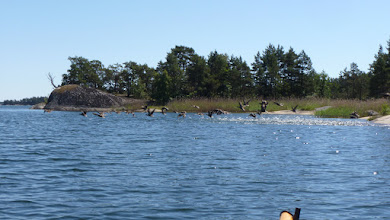 Photo: Ducks!