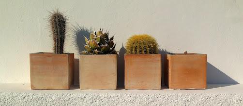 Photo: Cacti