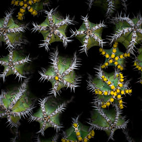 Give me a hug by Ron n'Roll - Nature Up Close Other plants ( thorns, plant, cactus, life )
