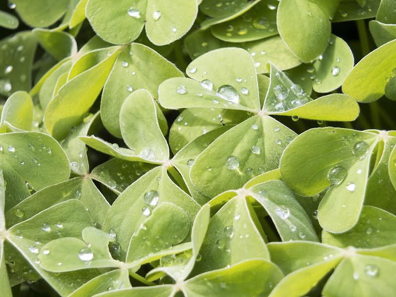 Pioggia di primavera di manolina