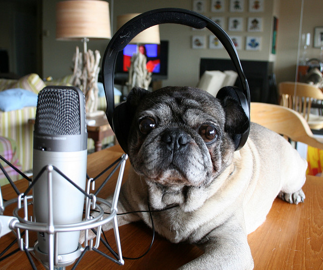 Pug Podcasting.jpg
