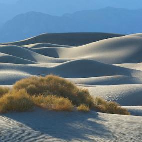 Mesquite Dunes by Phyllis Plotkin - Landscapes Deserts ( death valley, light and shadows, sand dunes, california, plants, mesquite dunes )