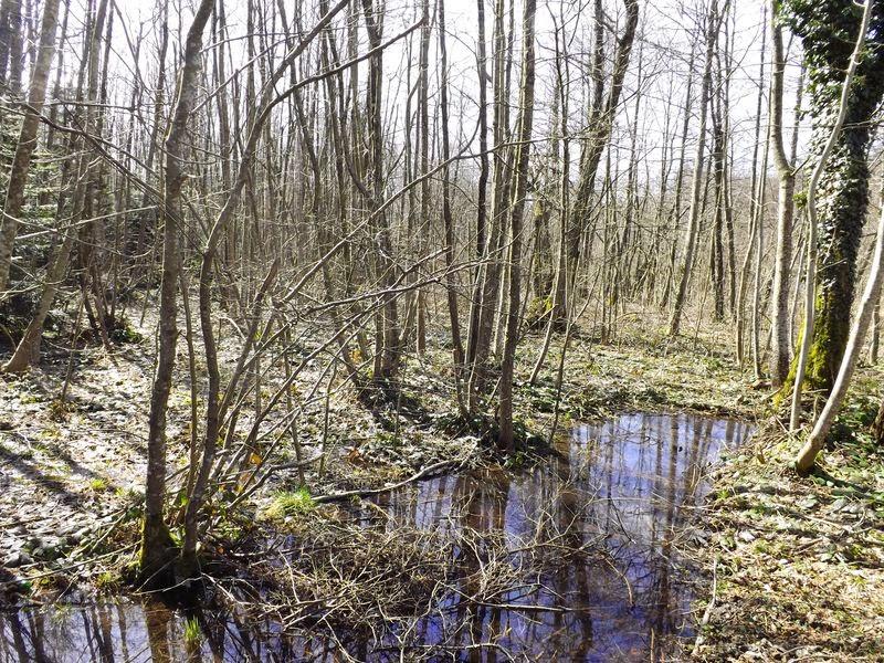 Le marais de la Pivodiere