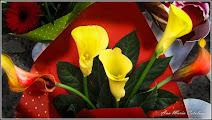 Photo: Cale - expuse spre vanzare pe Calea Victoriei - 2014.11.01  Album comun http://ana-maria-catalina.blogspot.ro/2017/05/plante-diverse-din-comert.html