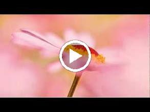 Video: A. Vivaldi  Concerto for flautino, strings   b.c. in A minor (RV 445) -