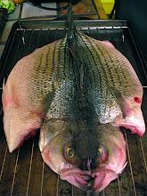 Photo: boned  whole striped bass