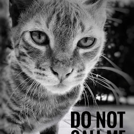 Meme meow by Nishant Mishra - Typography Captioned Photos ( cats, meme, black and white, message, funny )