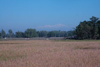Photo: The Kanchanjunga, view from Panchagarh