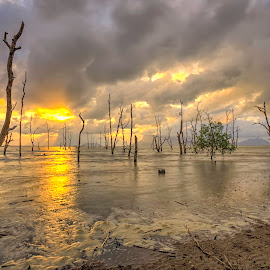 Sunset by PENDI KAMRI - Landscapes Sunsets & Sunrises ( sky, beautiful, seascape, sunset, beach, clouds, water, sun, sea,  )