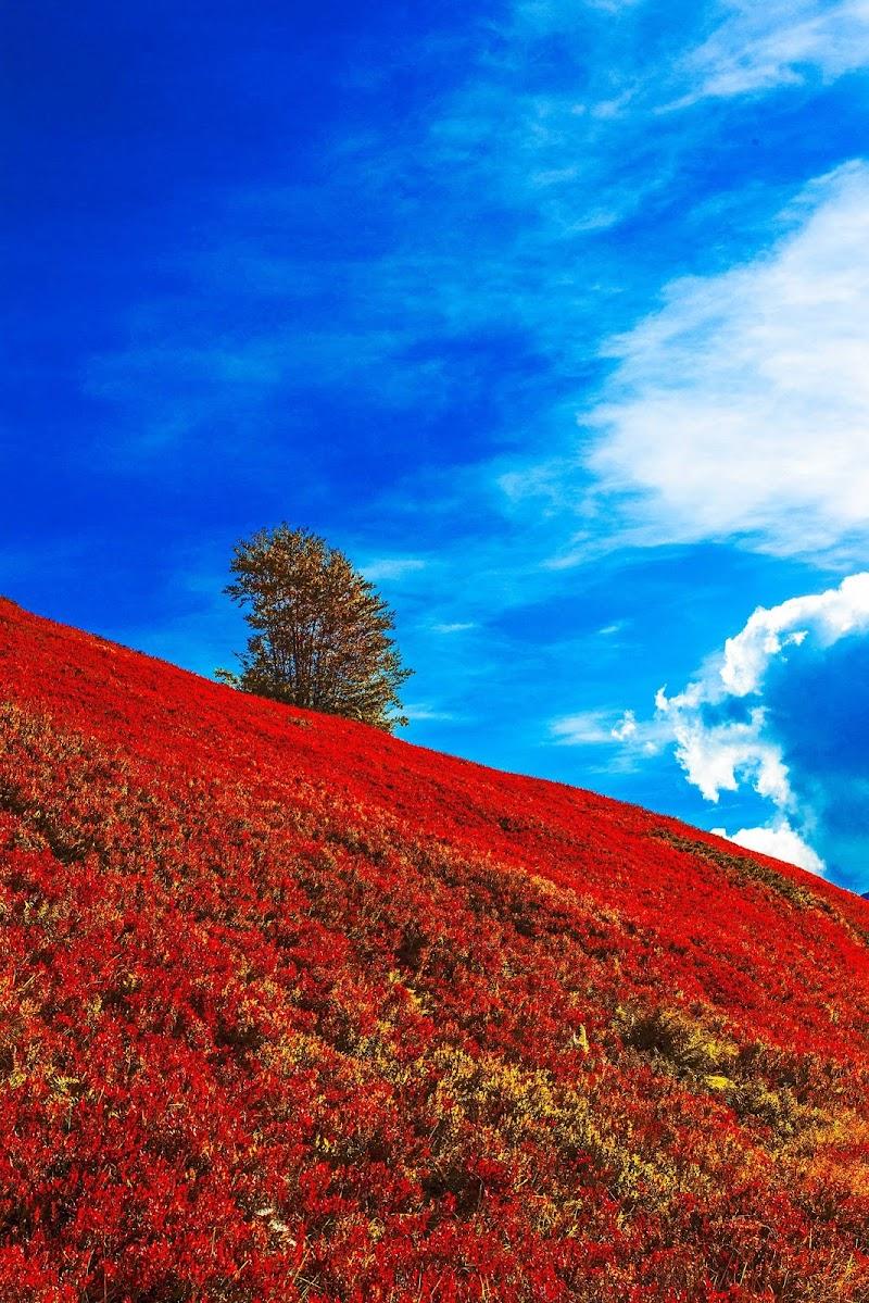 Colori d'autunno di alexcottiphart