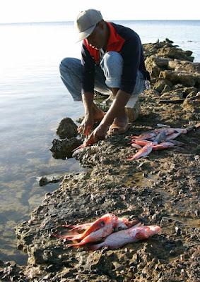 Pescatore Caraibico di dicorsa