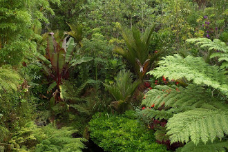 Photo: The 461 mile long Waikato River is the longest in New Zealand.  Tropical gardens flourish in its temperate climate.