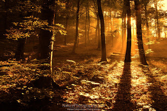 Photo: Forest in the Morning