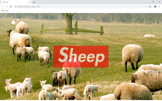 Sheep Wallpapers and New Tab