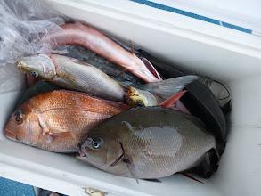Photo: ワタナベさんの釣果。 オナガ、真鯛、クロ、イサキ・・・。
