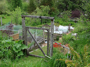 Photo: The vegetable garden at Lemon Acres Bed and Breakfast.