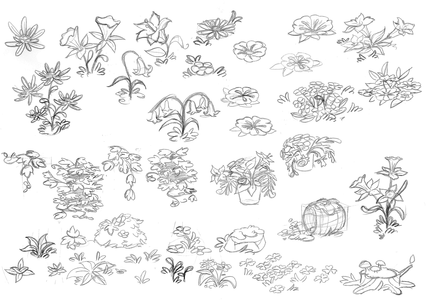 Early sketches of various flowers and other plant life.