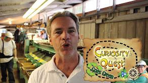 Curiosity Quest Goes Green thumbnail