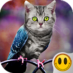 Simulator Morph Animal 1.3 Apk