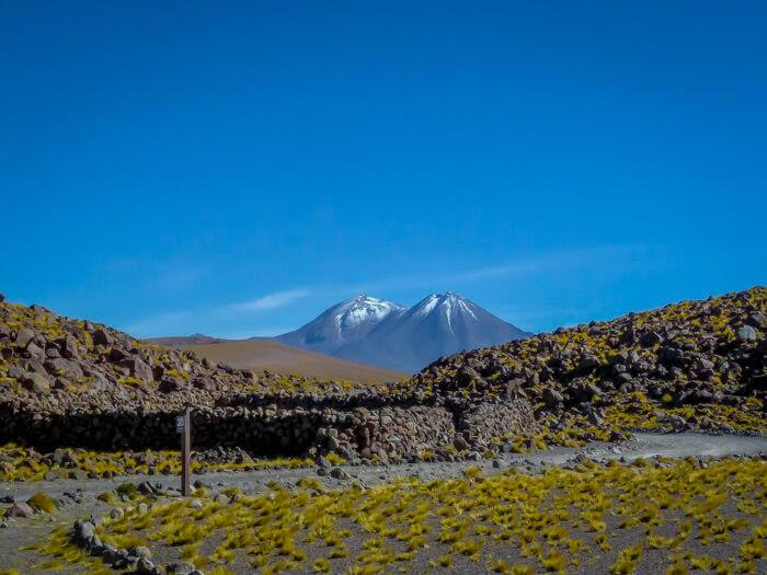 yellow+flowers+desierto+atacama+north+chile.jpg