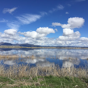 Reflections of Spring by Tracy Lynn Hart - Instagram & Mobile iPhone ( clouds, water, reflection, blue, seasons, ducks, weather, spring )