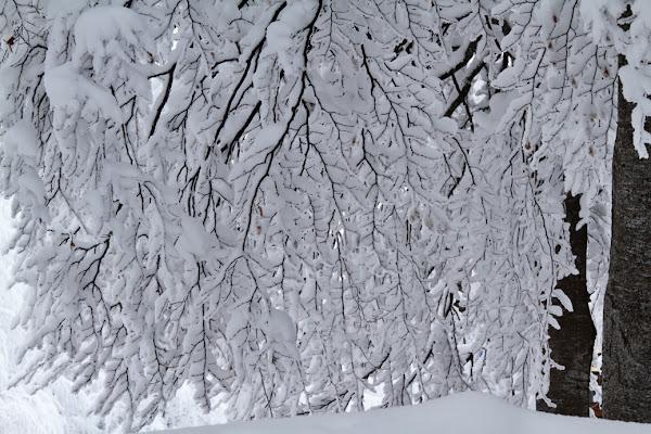 Sommerso dalla neve di Damiano