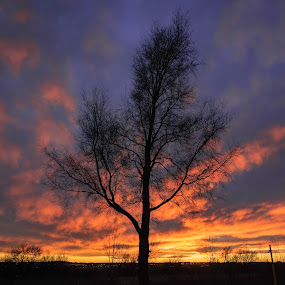 Fire Storm by Duane Vosika - Landscapes Sunsets & Sunrises ( landscapes, nature, sun ray, tree, yellow, winter, nebraska, clouds, red, orange, nikon, omaha, light, sunset, fire )