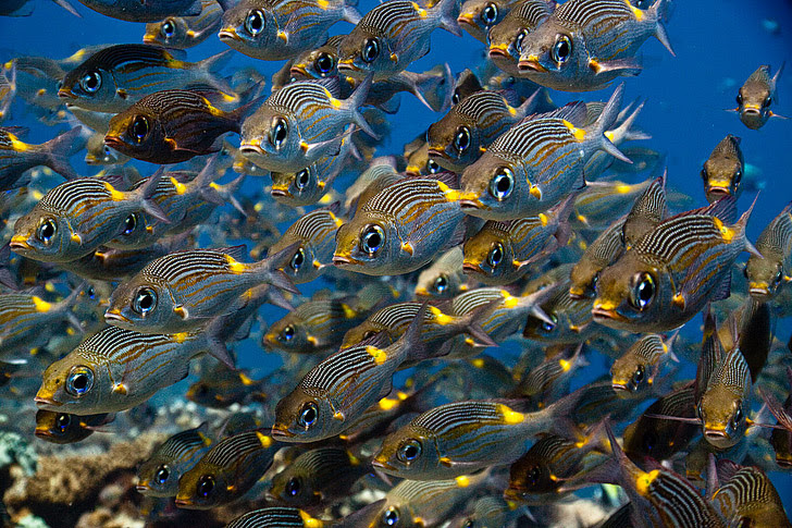 Borneo Malaysia (25 Best Dive Sites in the World to Put on Your Bucket List).