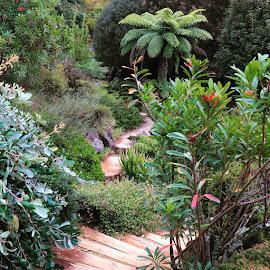 Secret Garden by Kirsten Evans - Novices Only Landscapes