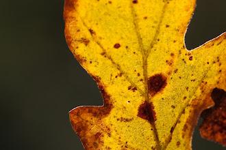 Photo: Leaf and Light, plate 2