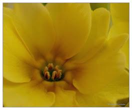 Photo: Blütenzauber