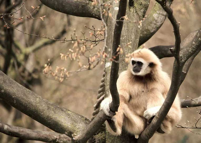 میمون های تایلند
