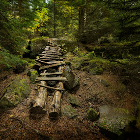 Inviting by Kaspars Dzenis - Landscapes Forests ( iceland, autumn, green, path, moss, stone, rock, forest, landscape )