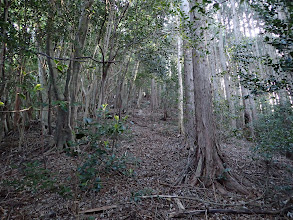 二次林との境を進む